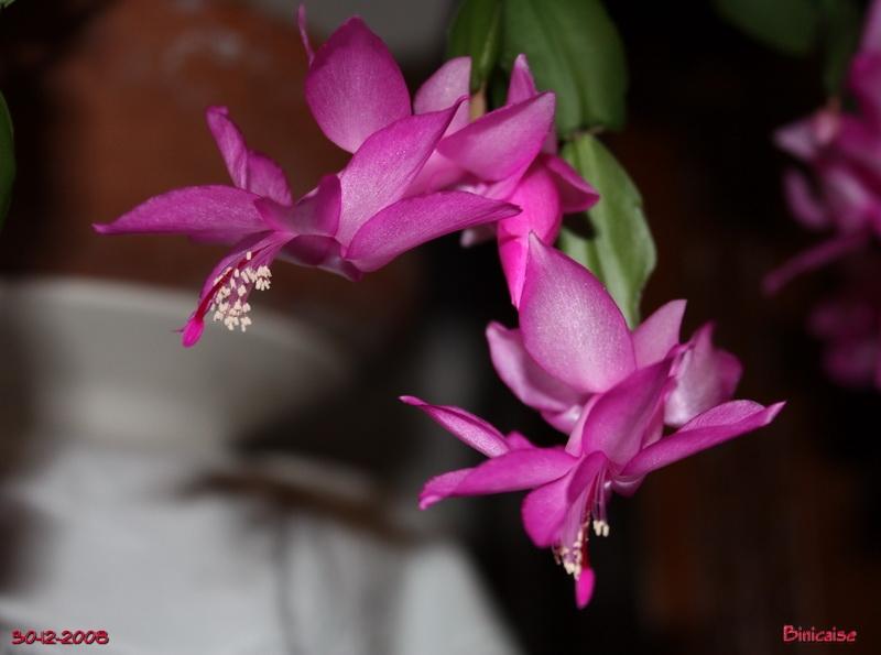 cactusdenol01929.jpg