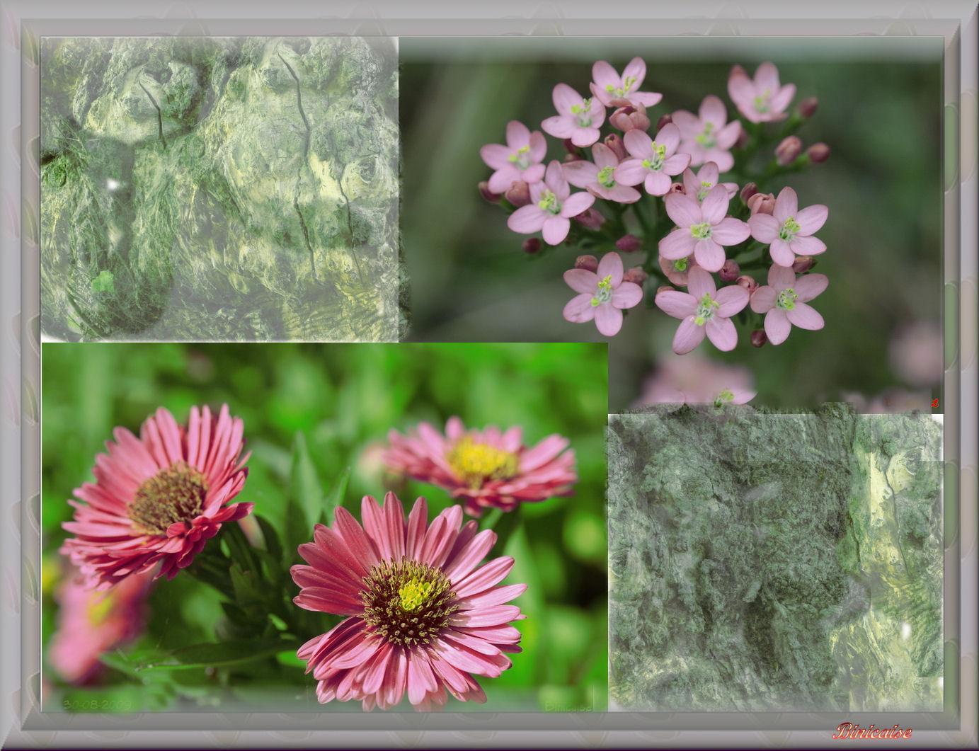 fleursasters.jpg