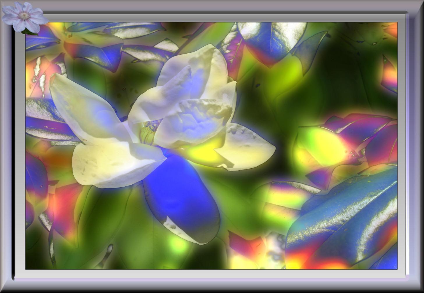 tulipiermulticolor.jpg
