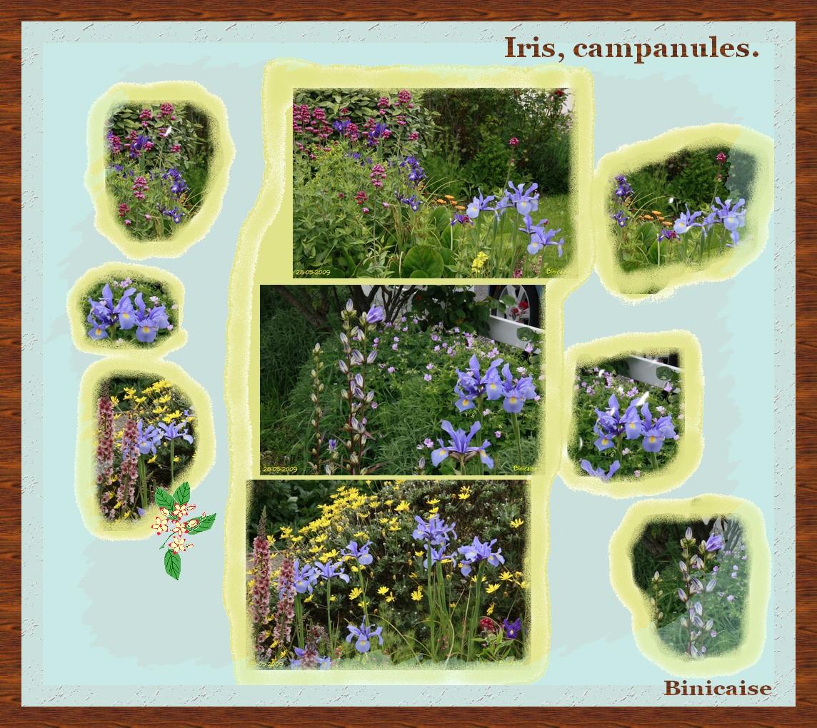 iriscampanules.jpg