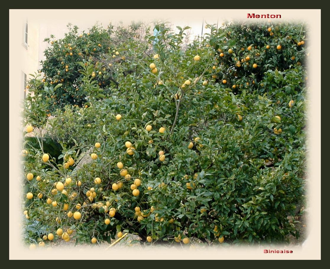 lescitronsmenton200527.jpg