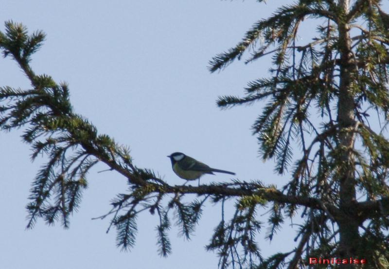 oiseaux02.jpg