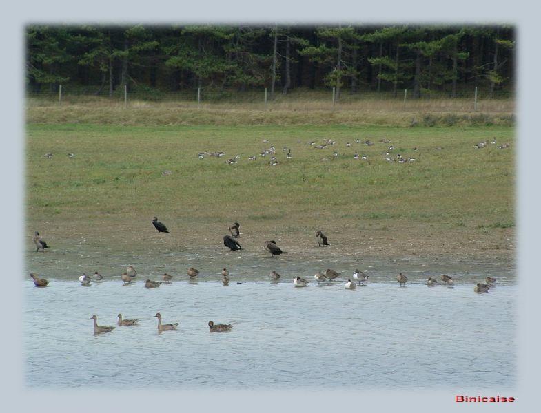 oiseauxdanslemarquenterre0067.jpg