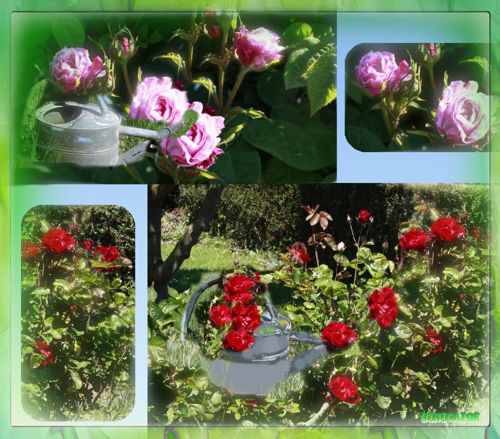 rosesrougesetroses.jpg