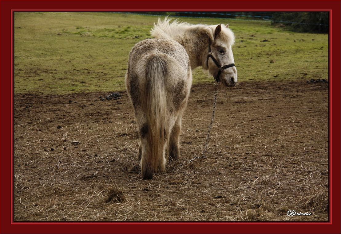 cheval01.jpg