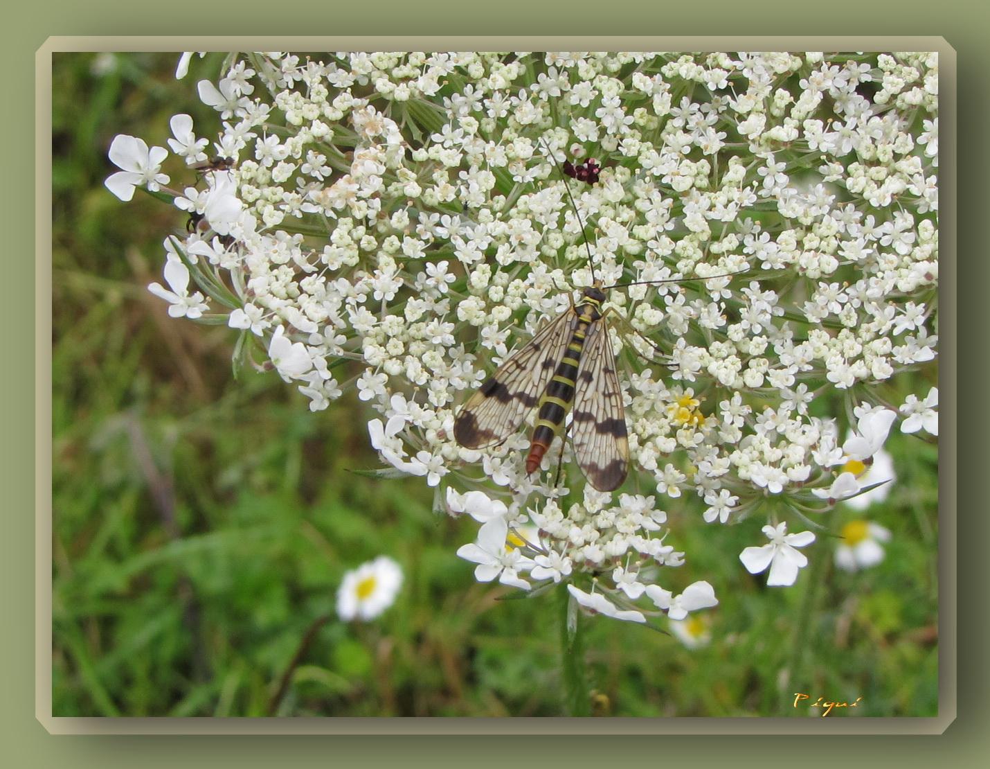 insectestsauveur.jpg