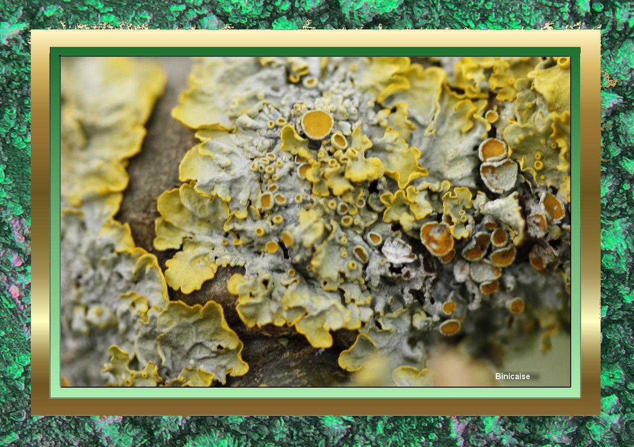 lichen02.jpg