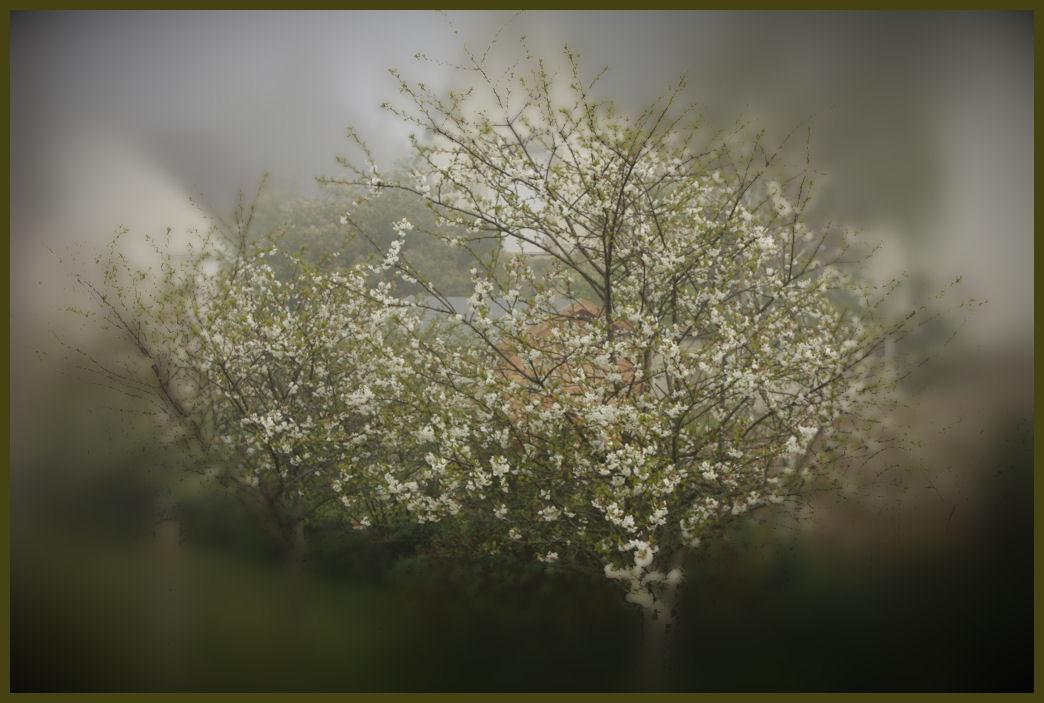 cerisier2.jpg