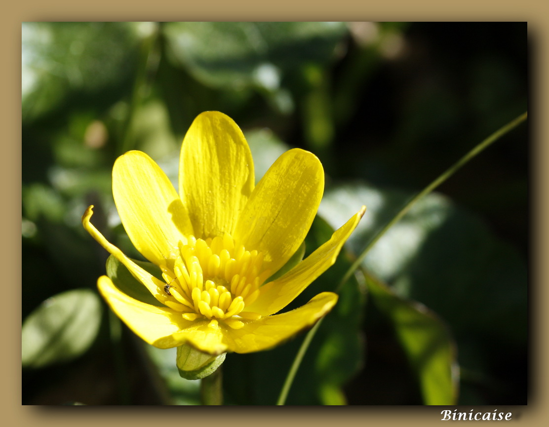 fleurjaunecoeur.jpg