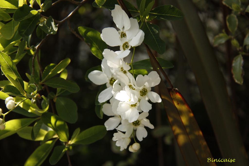 fleursblanches0001.jpg