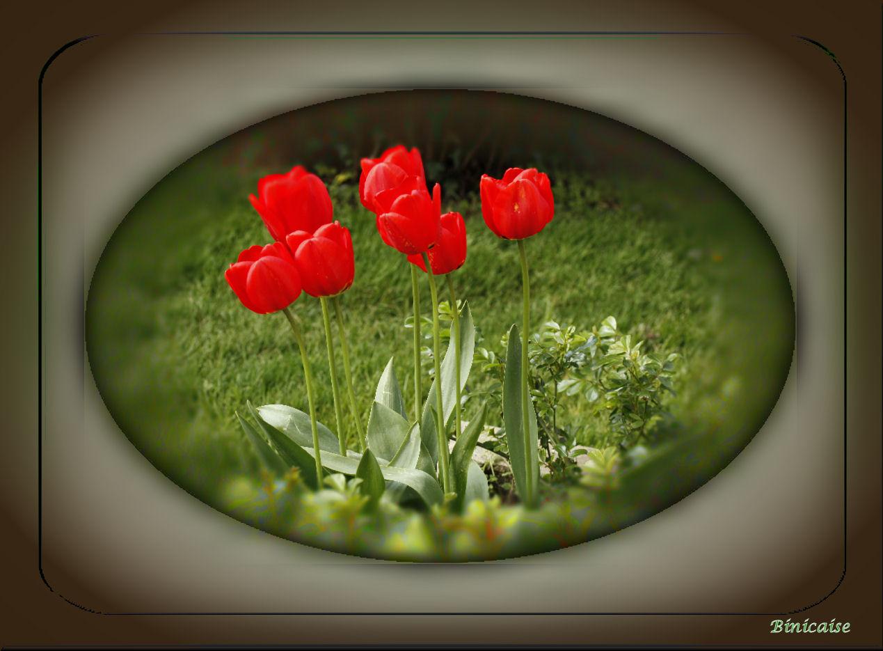 tulipes01.jpg