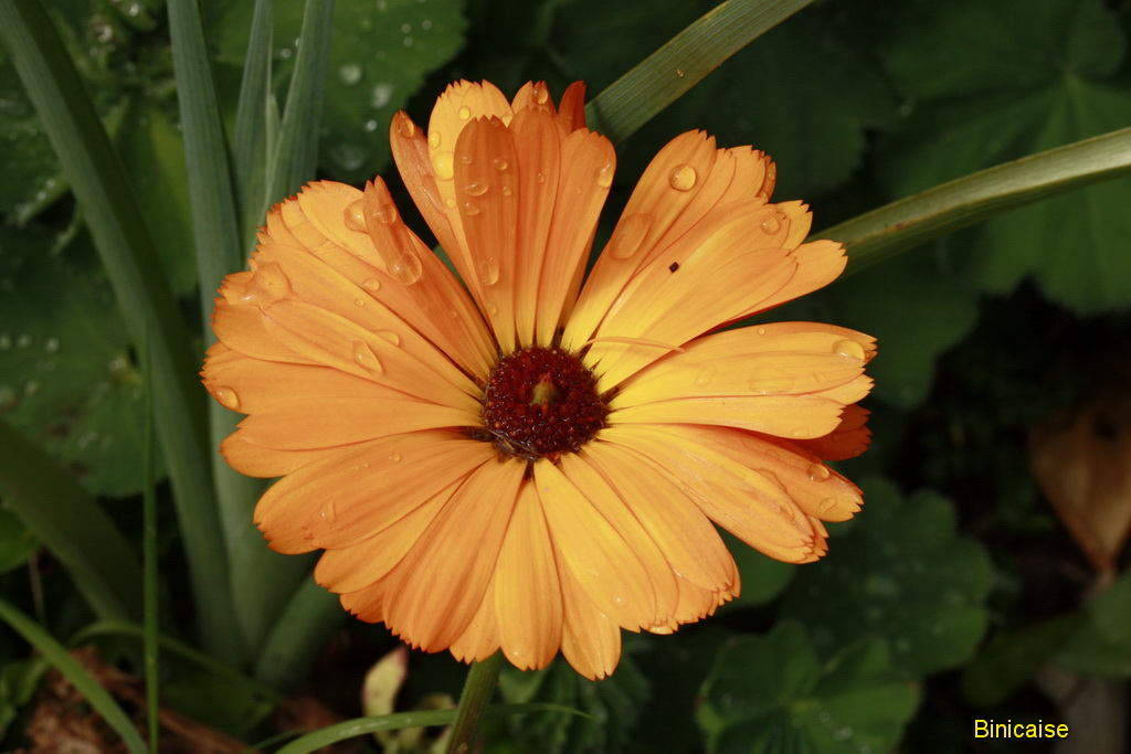fleursmai0002.jpg