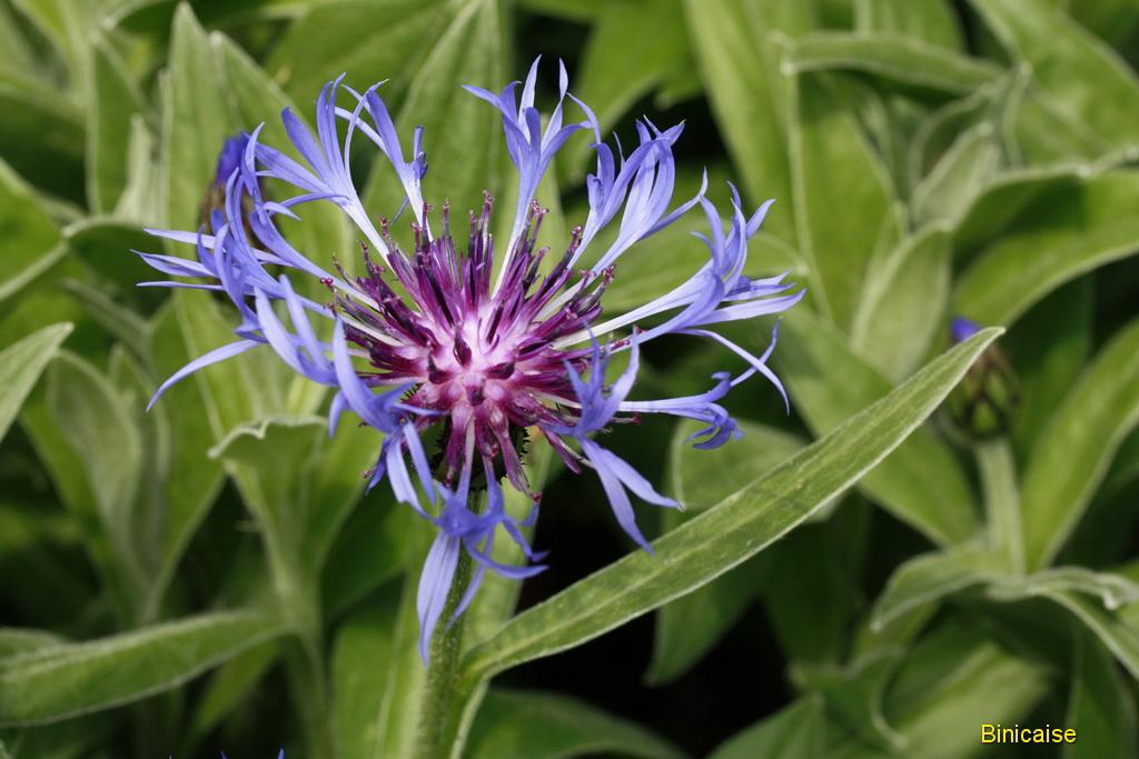 fleursmai0004.jpg
