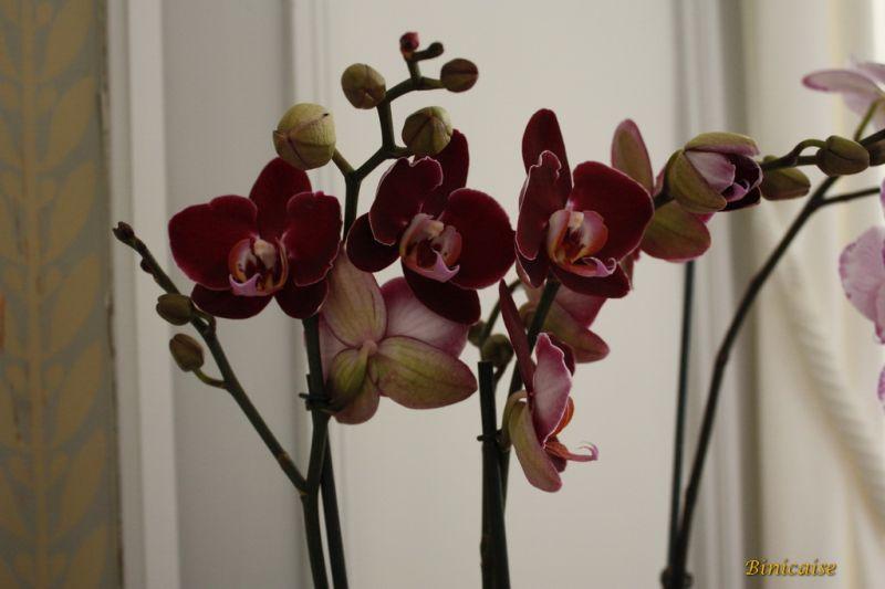 orchidesdevalenay0017redimensionner.jpg