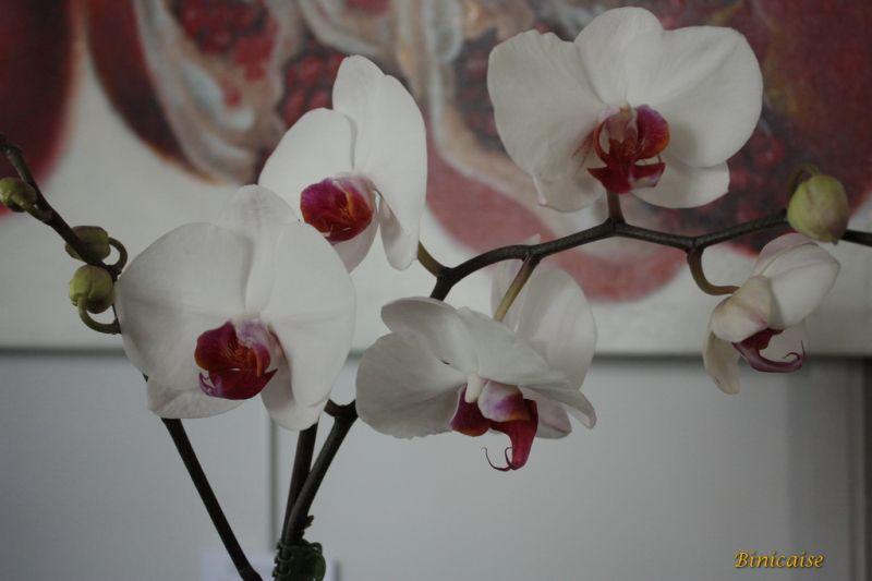 orchidesdevalenay0022redimensionner.jpg
