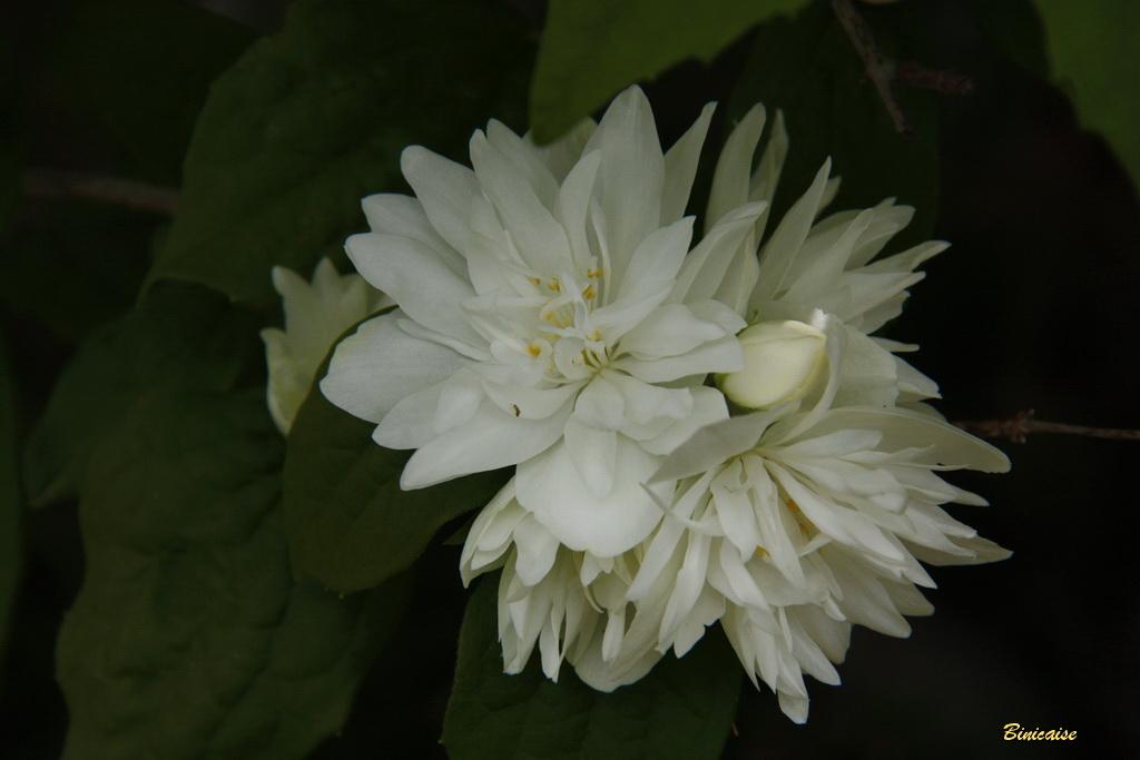 fleursvaries0001.jpg
