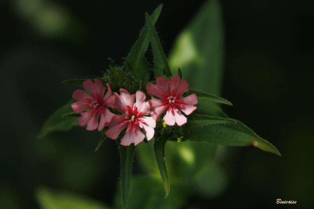 fleursvaries0003.jpg