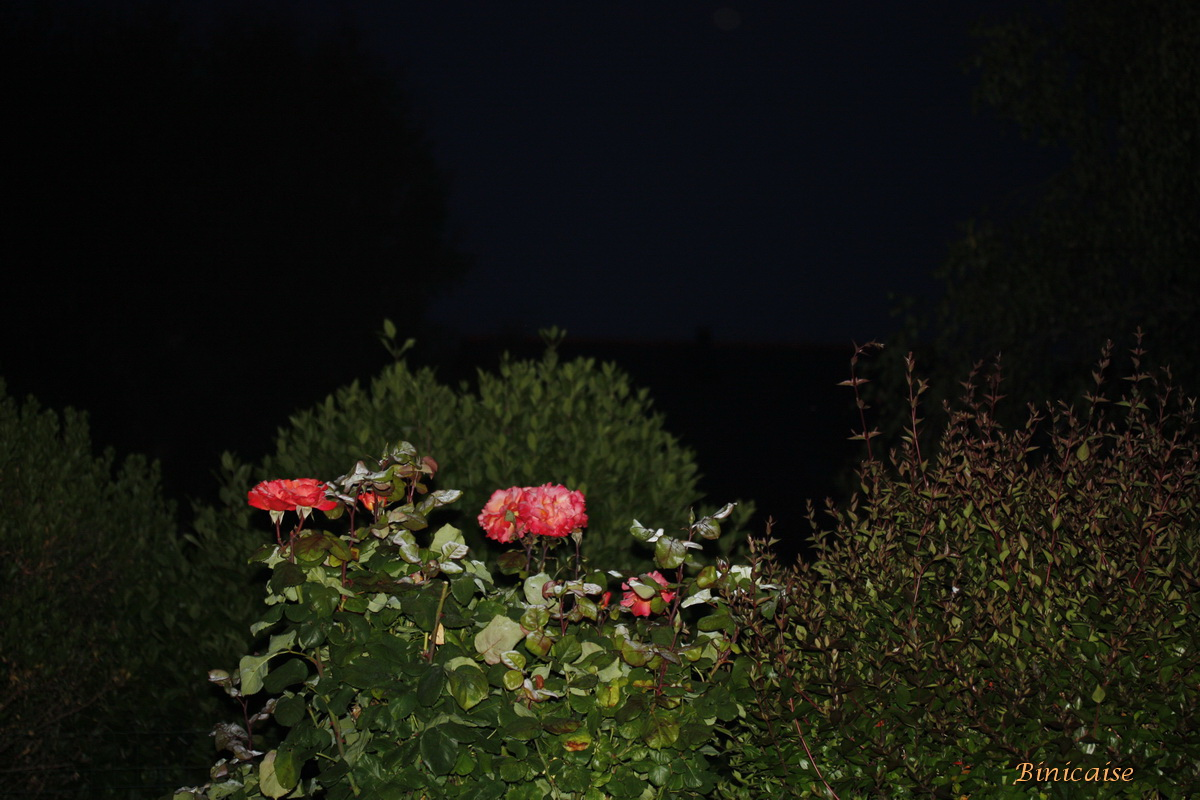 nuitsurlejardin0003.jpg