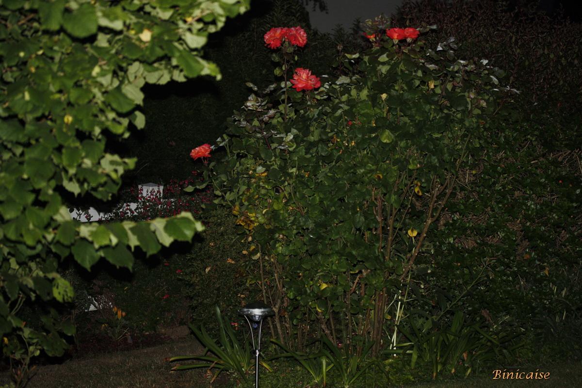 nuitsurlejardin0004.jpg