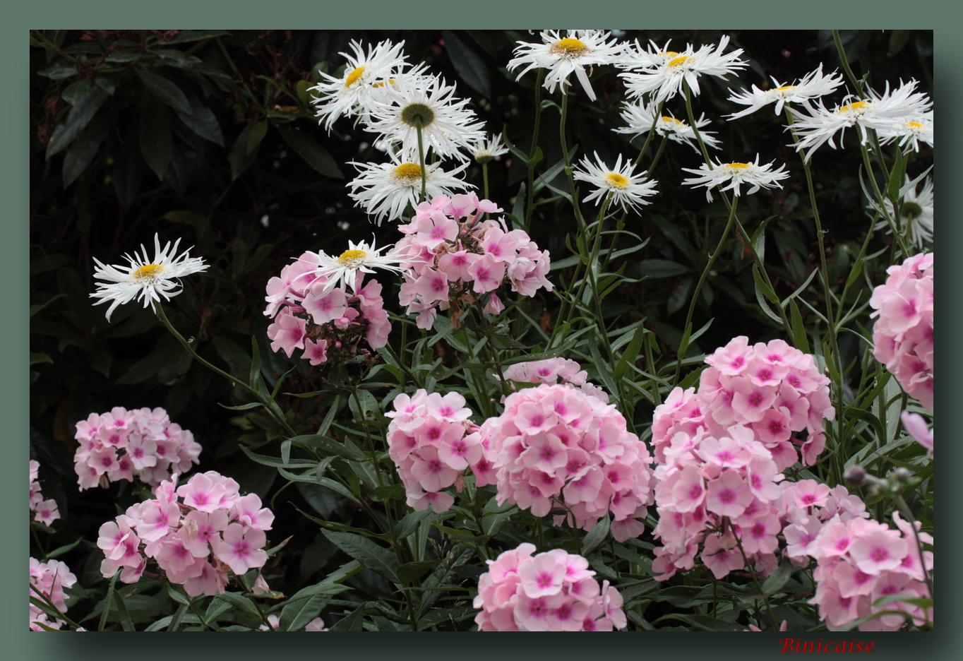 fleursrosesetblanches.jpg