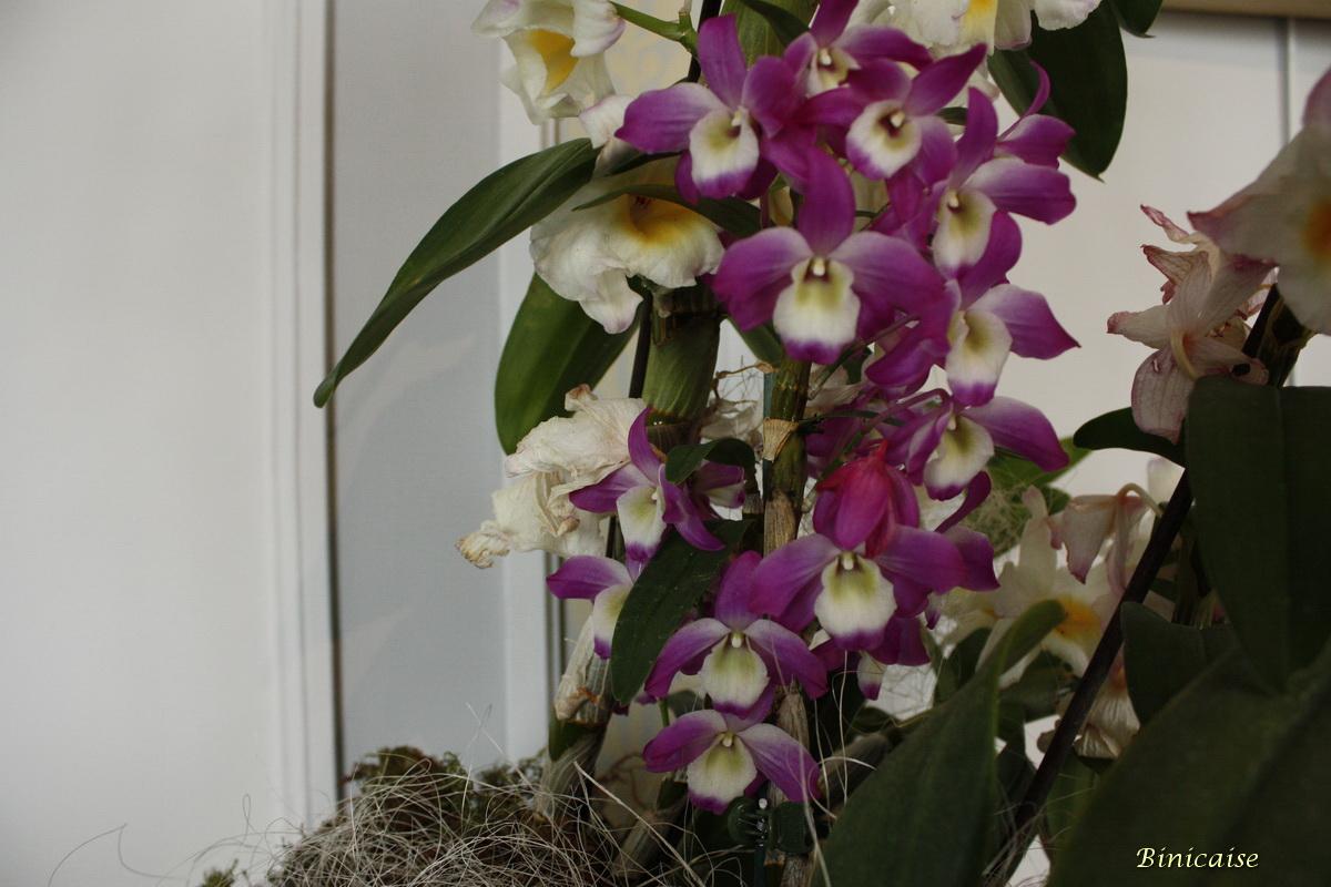 orchidesvalencaymai20100001.jpg