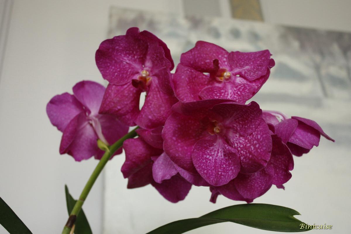 orchidesvalencaymai20100003.jpg
