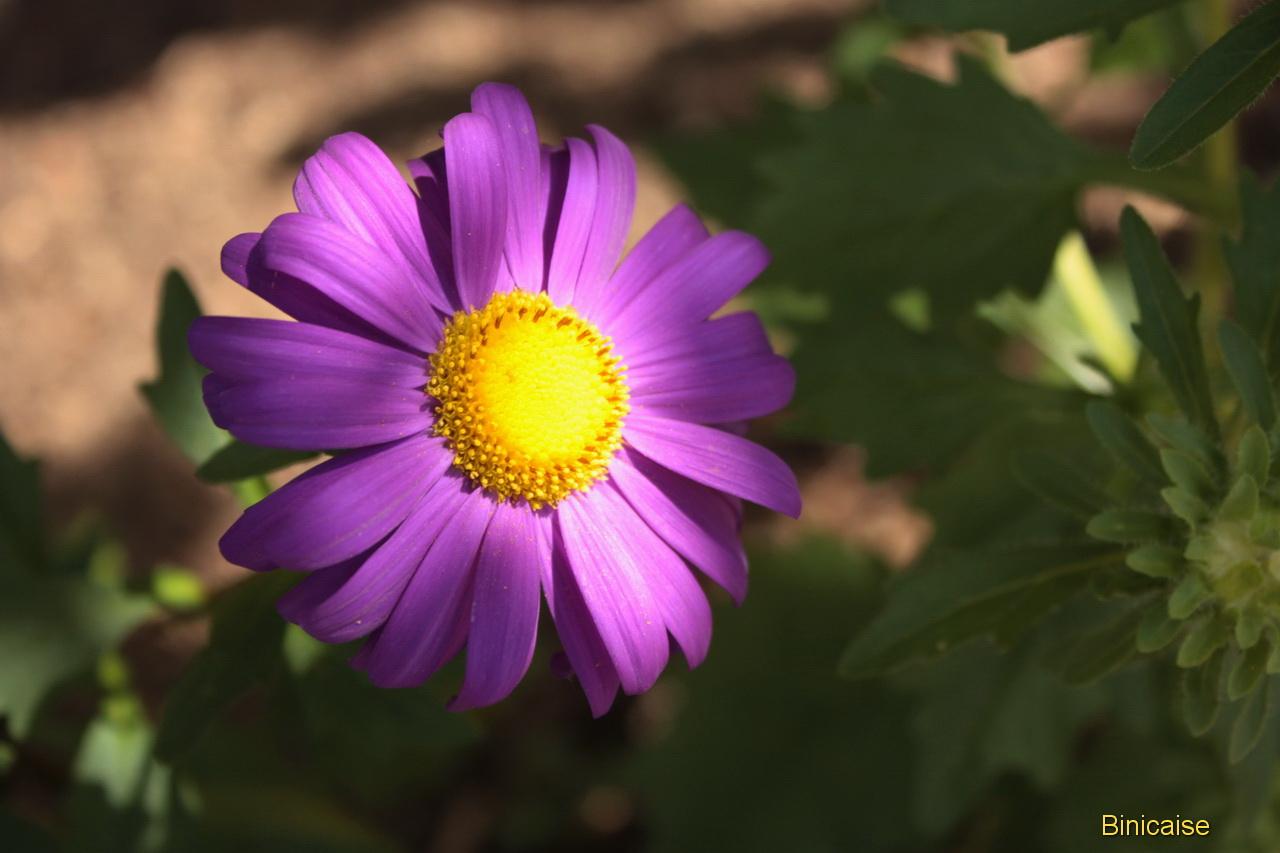fleursdautomne0004.jpg
