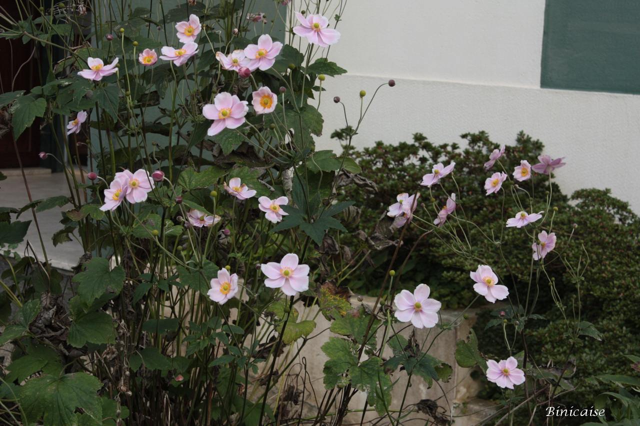 fleursdautomne00062.jpg