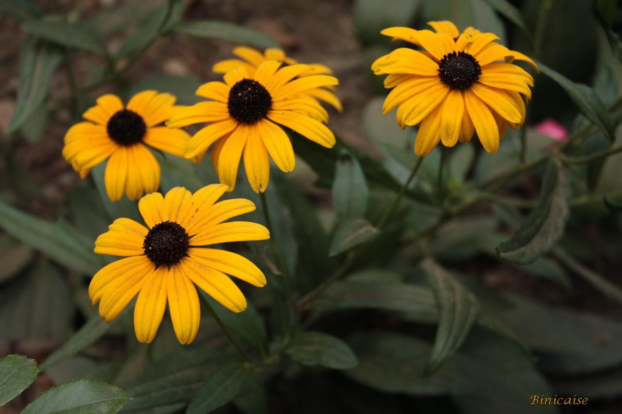 fleursdautomne1.jpg