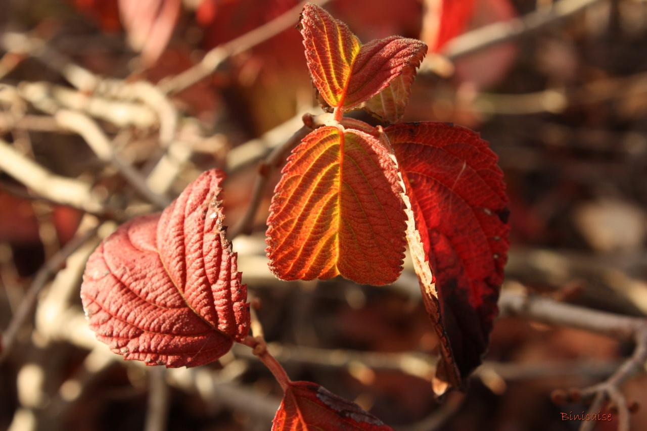 feuillesdautomne20002.jpg