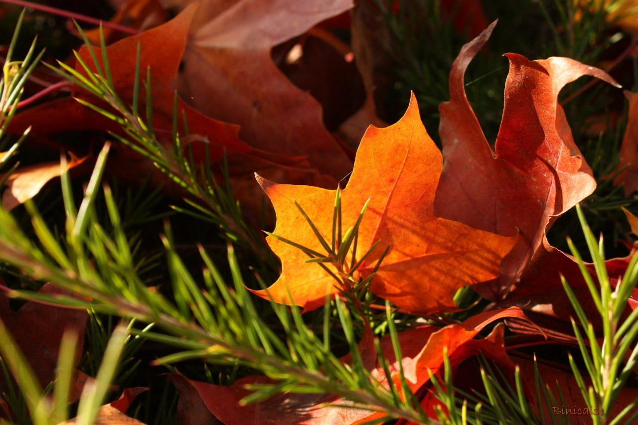 feuillesdautomne20003.jpg