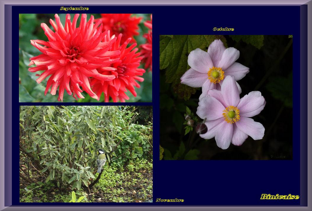 fleursautomne.jpg