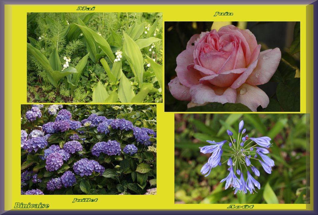 fleursprintempsete2010.jpg