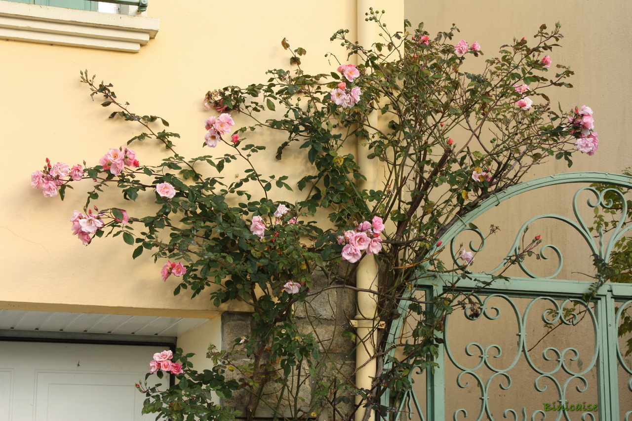 rosiergrimpant01.jpg