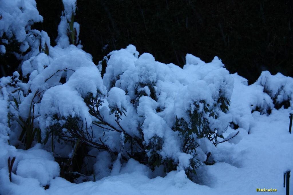 neige2010120110.jpg