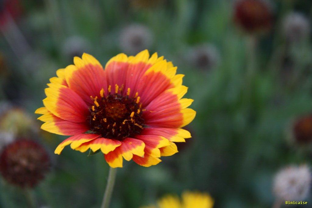 fleur0001.jpg
