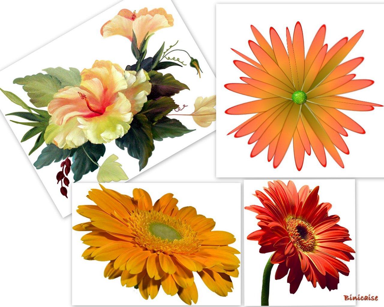 fleursarbresetc1redimensionner.jpg