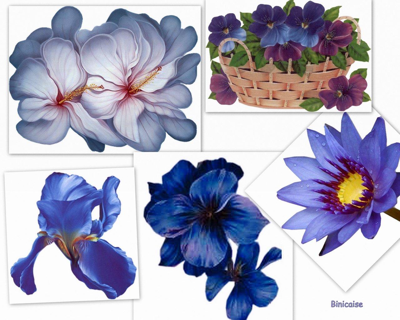 fleursbleuesredimensionner.jpg