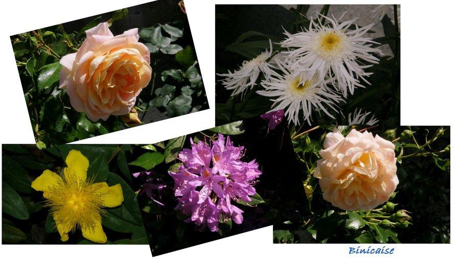 fleursparcmontageredimter.jpg
