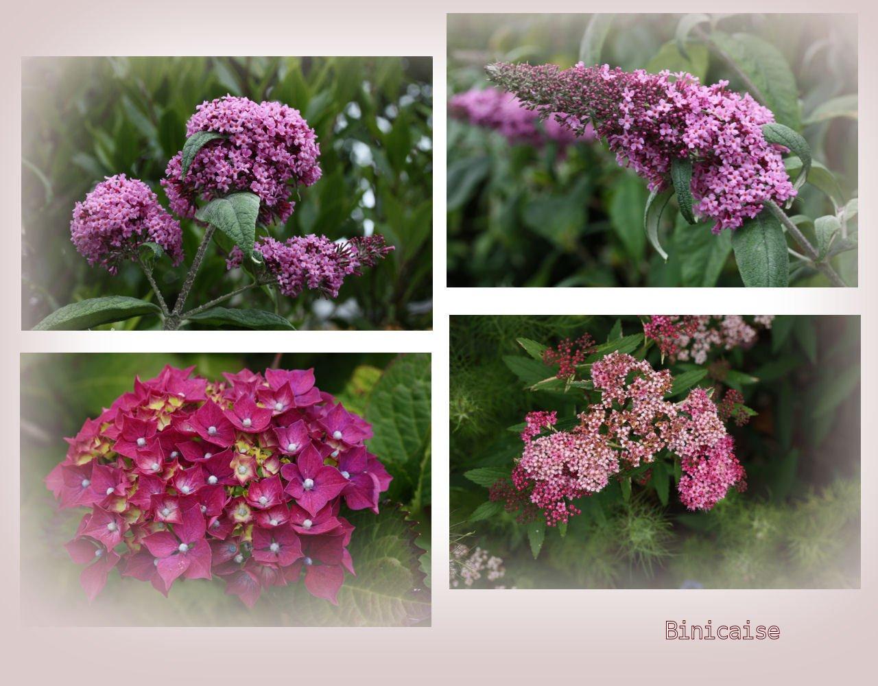 fleursdejuin.jpg