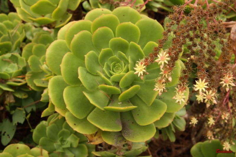 cactus0006.jpg