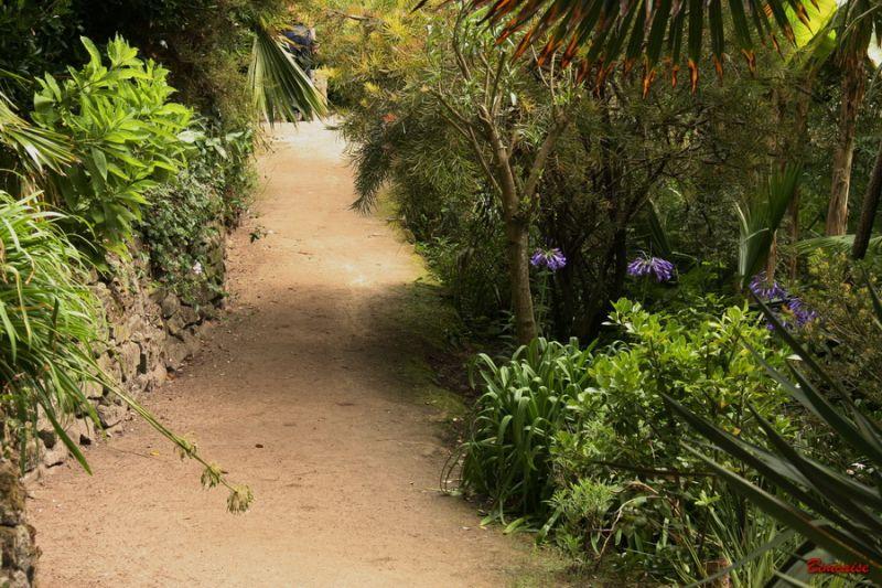 jardindeau0005.jpg