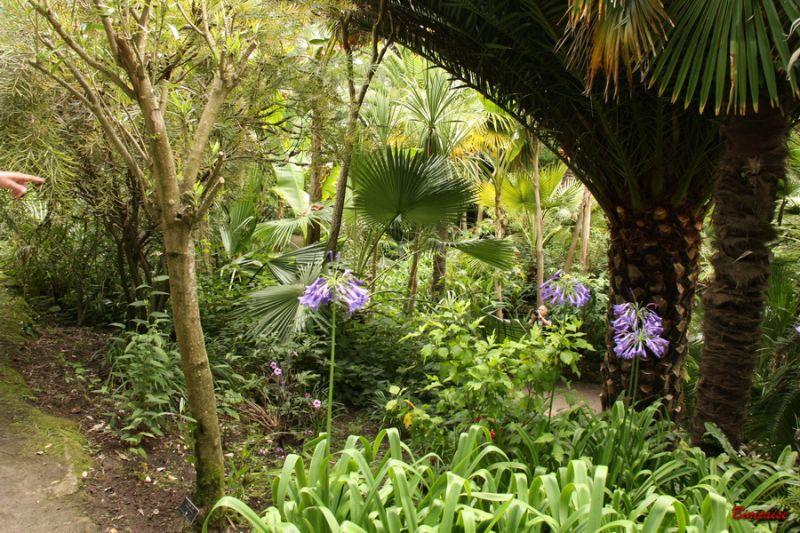 jardindeau0006.jpg