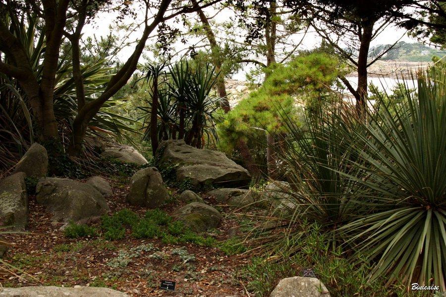 jardindesterresaustrales0004.jpg