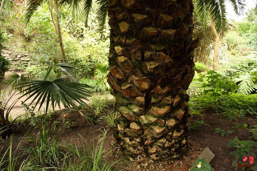 palmiers0003.jpg
