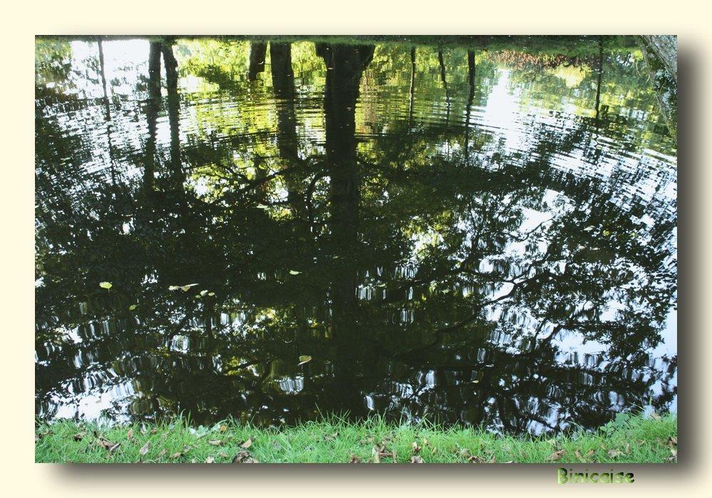 reflets.jpg