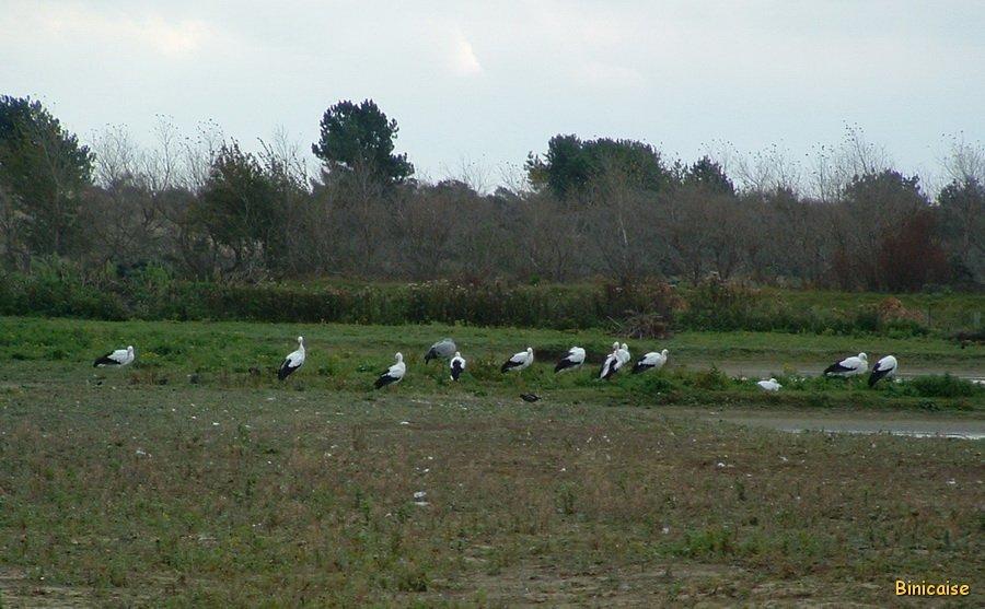 Baie-de-Somme-Oiseaux-03 Parc du Marquenterre dans Picardie