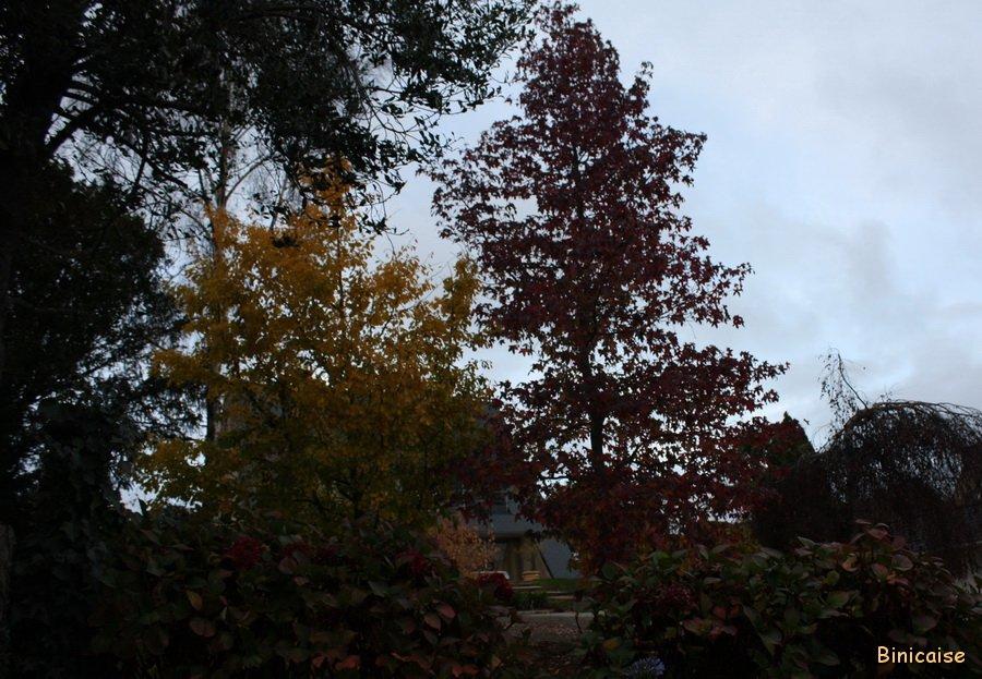 Binic couleurs d'automne. dans Bretagne Binic-22-11-11-