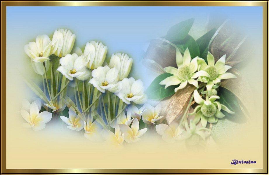 Fleurs blanches dans Creations Fleurs-blanches_redimensionner
