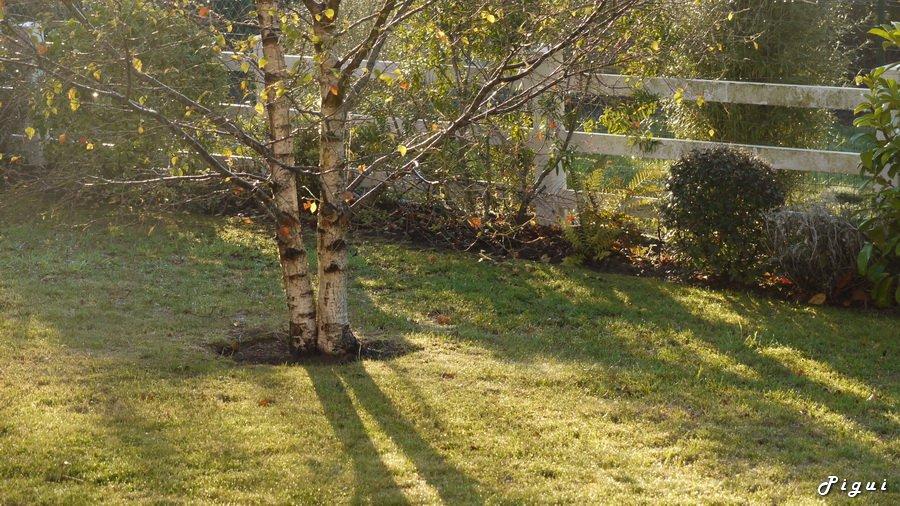 Lumière matinale. dans Jardin binicaise P1020077_redimensionner